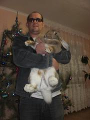 Кролики породы ФЛАНДР и КАЛИФОРНИЙСКИЙ