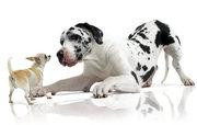 Бесплатная доставка корма для собак и кошек