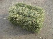 Продаю сено разного вида