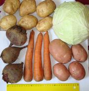 овощи в ассортименте