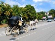 Карета в Ростове,  свадебный кортеж,  невеста,  жених,  принц  белый конь