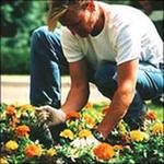 Садовник требуется (Обуховка)