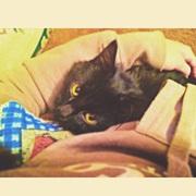Кошка,  черная. От роду месяцев 5