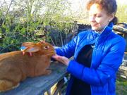 продам кроликов фландр,    новозеландская белая,  новозеландская красная