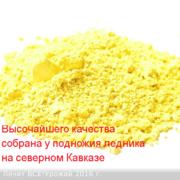 Пыльца сосны.Горная кавказская.Урожай 2016г!
