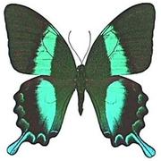 Лучшие подарки на 14 февраля - Живые Бабочки!