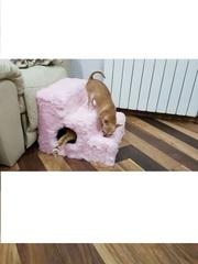 Ступени прикроватные для мелких пород собак