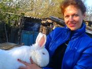 Кролики породы Фландр,   Новозеландская Белая
