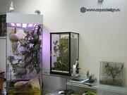 Высоко доходный  бизнес ферма Живых Тропических Бабочек  из Амазонки