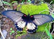 Высоко прпбыльный бизнес ферма Живых Восхитительных Бабочек  из Южной Америки