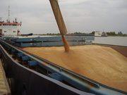 Зерновозы,  требуются ЮФО,  ПФО,  ЦФО