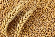 Пшеница 3-4 класса