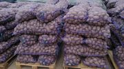 Картофель оптом от КФХ из Республики Беларусь,  урожай 2019.