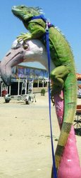 Продам метровую игуану