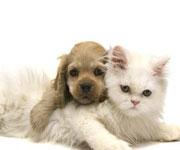 Клиника скорой ветеринарной помощи